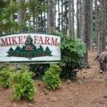 Fun on Mike's Farm