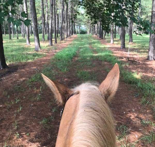 Horse to Church Burgaw NC