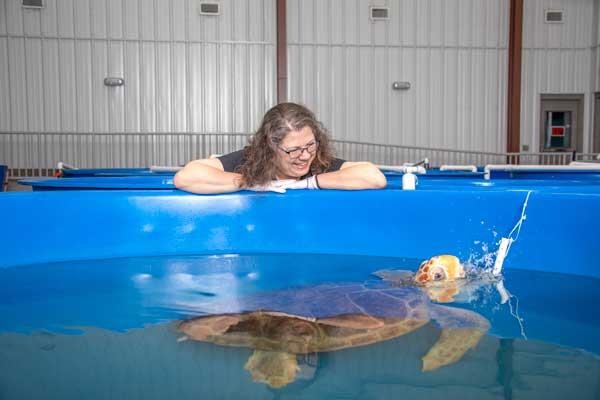 Sea Turtle Rescue Karen Beasley NC