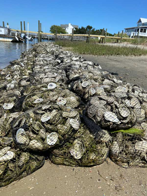 Oyster Recycle Shoreline Topsail NC