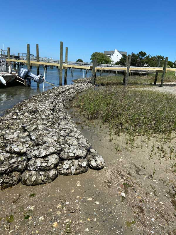 Oyster Shell Recycle Living Shoreline