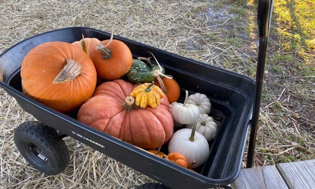 Emergent: Passing the Pigskin and Pumpkins
